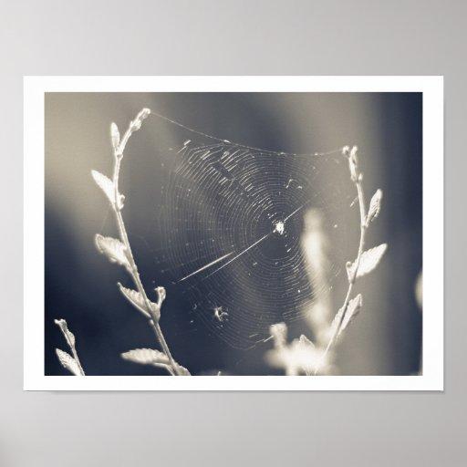 Toile d'araignée affiche