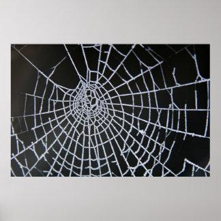 Toile d'araignée posters