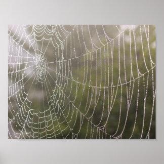Toile d'araignée d'araignée affiche