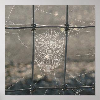 Toile d'araignée de début de la matinée poster