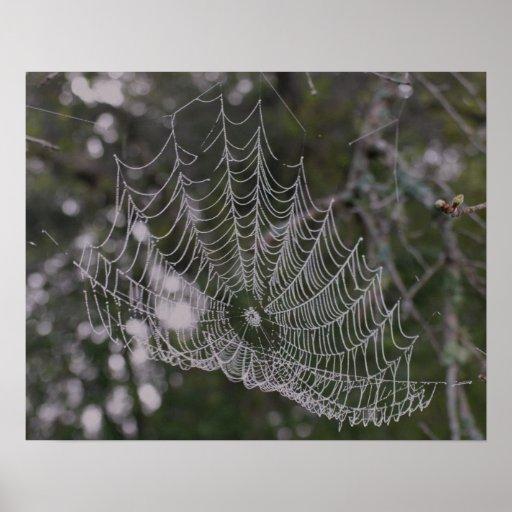 Toile d'araignée en rosée de matin affiches