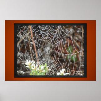 Toile d'araignée poster