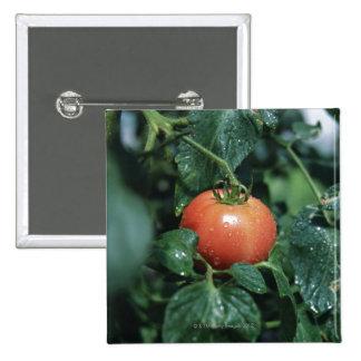 Tomato 2 Inch Square Button