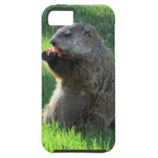 Tomato Groundhog iPhone 5 Cases