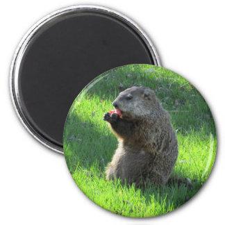 Tomato Groundhog Magnet