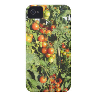 Tomato plants growing in the garden Case-Mate iPhone 4 case