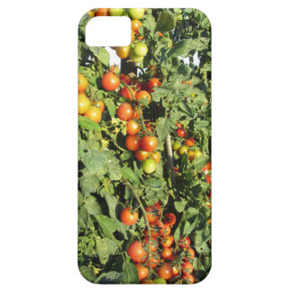 Tomato plants growing in the garden iPhone 5 cover