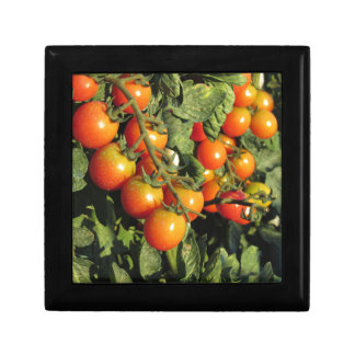 Tomato plants growing in the garden jewelry boxes