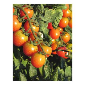 Tomato plants growing in the garden letterhead