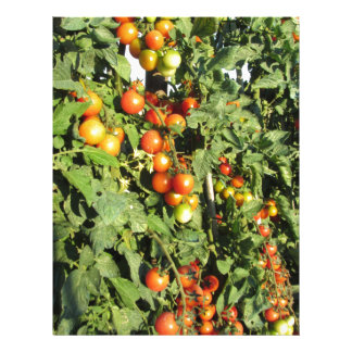 Tomato plants growing in the garden letterhead design