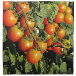 Tomato plants growing in the garden napkin
