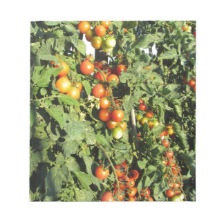 Tomato plants growing in the garden notepad