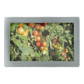 Tomato plants growing in the garden rectangular belt buckle