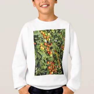 Tomato plants growing in the garden sweatshirt