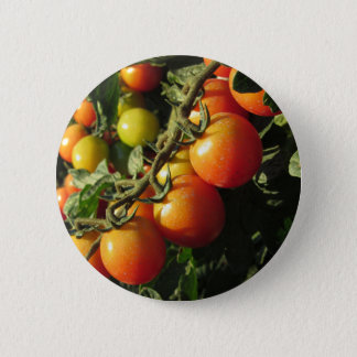 Tomato plants growing in the garden . Tuscany 2 Inch Round Button