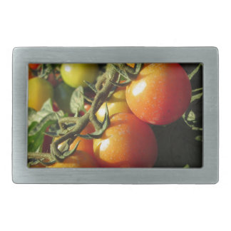 Tomato plants growing in the garden . Tuscany Belt Buckle