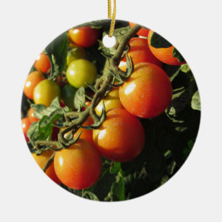 Tomato plants growing in the garden . Tuscany Ceramic Ornament