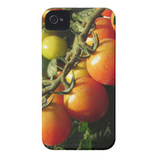 Tomato plants growing in the garden . Tuscany iPhone 4 Cover