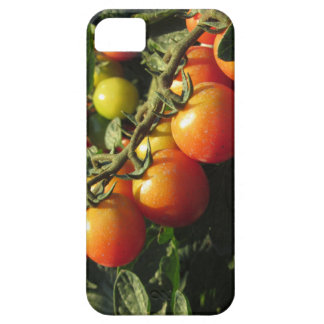 Tomato plants growing in the garden . Tuscany iPhone 5 Case