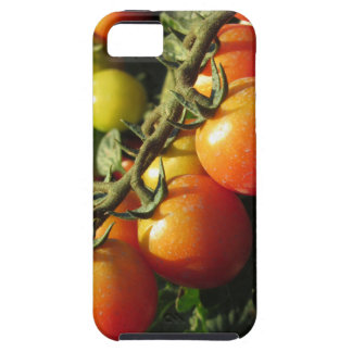 Tomato plants growing in the garden . Tuscany iPhone 5 Cover