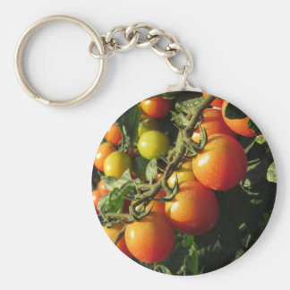Tomato plants growing in the garden . Tuscany Keychain