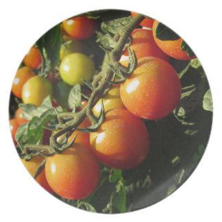 Tomato plants growing in the garden . Tuscany Plate