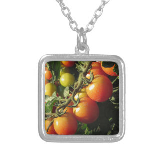 Tomato plants growing in the garden . Tuscany Silver Plated Necklace
