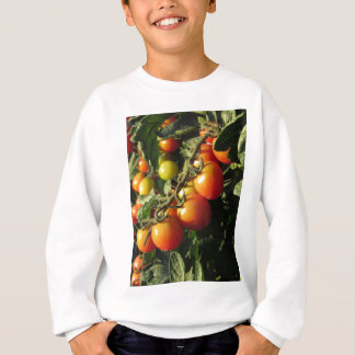 Tomato plants growing in the garden . Tuscany Sweatshirt