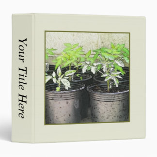Tomato Seedlings In Nursery Pots Binder