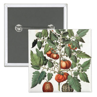Tomatoes and Melons: 1.Poma amoris fructu luteo; 2 2 Inch Square Button