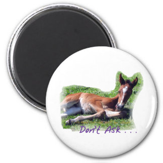 Tongue Dragging funny foal 2 Inch Round Magnet