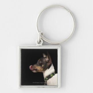 Tongue out of black and White Rat Terrier Silver-Colored Square Keychain