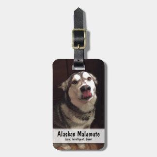 Tongue Teasing Alaskan Malamute Photograph Luggage Tag