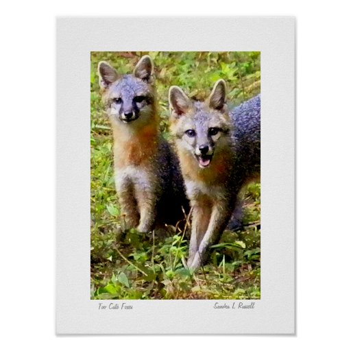 Too Cute Foxes original photo by S.L Russell Poster