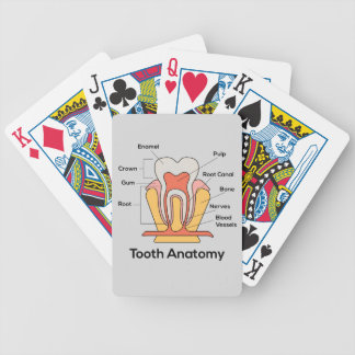 Tooth Anatomy Chart Bicycle Playing Cards