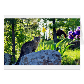 ~Top cat on Rock~ Card