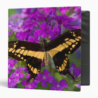 Top of a swallowtail butterfly binders