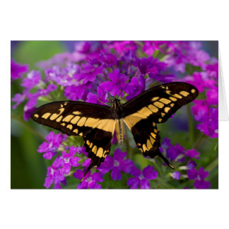 Top of a swallowtail butterfly card