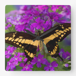 Top of a swallowtail butterfly clock