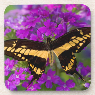 Top of a swallowtail butterfly coasters
