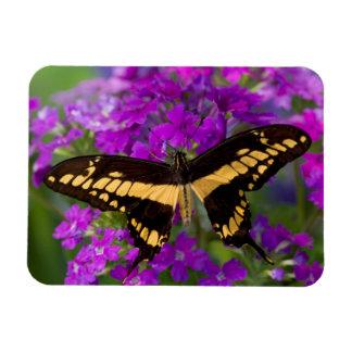 Top of a swallowtail butterfly rectangular photo magnet