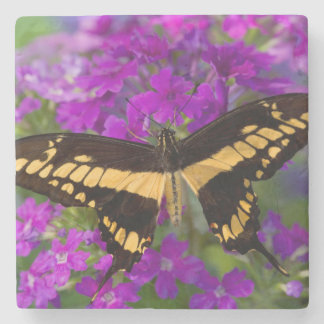 Top of a swallowtail butterfly stone beverage coaster