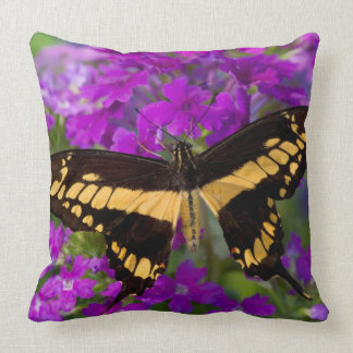 Top of a swallowtail butterfly throw pillow