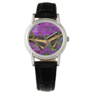 Top of a swallowtail butterfly watch