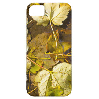 Top view of a wet autumn leaves case for the iPhone 5