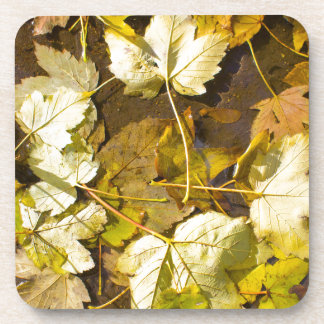 Top view of a wet autumn leaves coaster