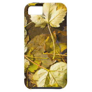 Top view of a wet autumn leaves iPhone 5 cases