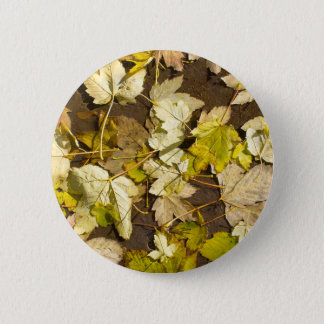 Top view of a wet autumn maple leaves 2 inch round button