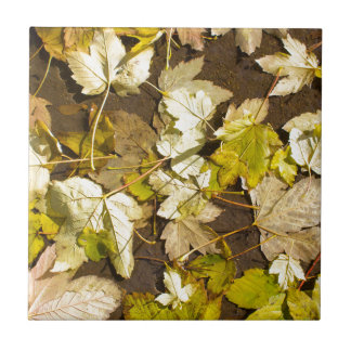 Top view of a wet autumn maple leaves ceramic tiles