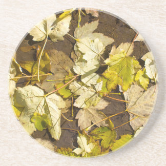 Top view of a wet autumn maple leaves coaster